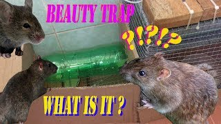 Beauty trap::Simple mouse trap with water bottle::Clip hot 2019