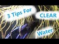How To: Get Crystal Clear Aquarium Water!  3 Tips 