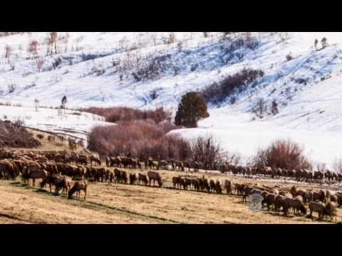 Emergency Winter Feeding on Tex Creek WMA