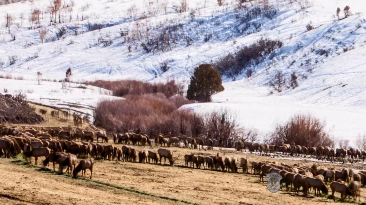 Emergency Winter Feeding On Tex Creek Wma Youtube