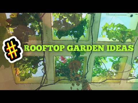 Rooftop vegetable garden in kovilpatti tuticorin tamilnadu youtube rooftop vegetable garden in kovilpatti tuticorin tamilnadu solutioingenieria Image collections