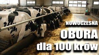 Zobacz nowoczesną oborę dla 100 krów | FARMER.PL