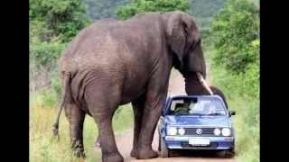 Самые большие животные.
