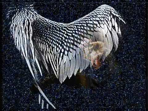 Wing on Wing (Esa-Pekka Salonen 2004)