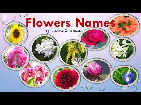 Flowers Names In Tamil & English With Images | பூக்களின் பெயர்கள் | Learn Flowers Name For Kids