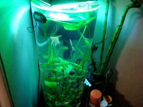My custom 15 gallon cylinder fresh water planted fish tank for 15 gallon fish tank