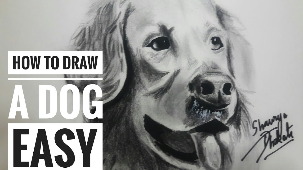 How To Draw And Shade A Dog Golden Retriever Easy Speed