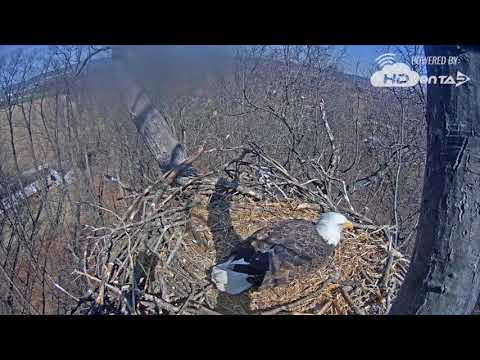 2018- Hanover, PA Bald Eagles- March 19 Recordings: 1PM to 3PM EST