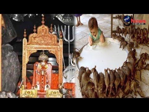 'करनी माता' मंदिर का बड़ा रहस्य, उड़ा देगा आपके होश | 'KARNI MATA' MANDIR SECRET