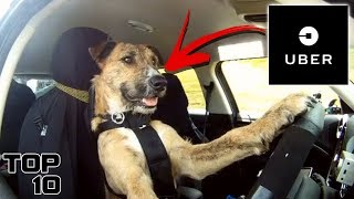Top 10 Animals With Full Time Jobs