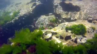 Scogli di Eraclea underwater 2017
