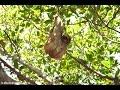Daniel Johnson\'s Monkey & Sloth Hangout | Roatan, Honduras