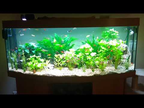Juwel Vision 450 Liter Aquarium
