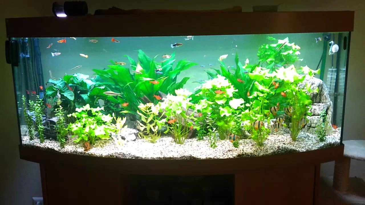 juwel vision 450 liter aquarium youtube. Black Bedroom Furniture Sets. Home Design Ideas