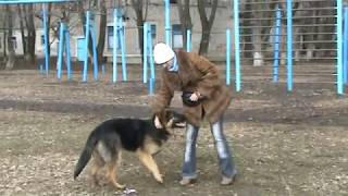 """дрессировка собак: команда """"ко мне"""""""