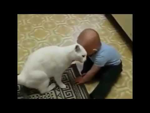 Funny cats and babies playing together .Dogs just don't want to bath