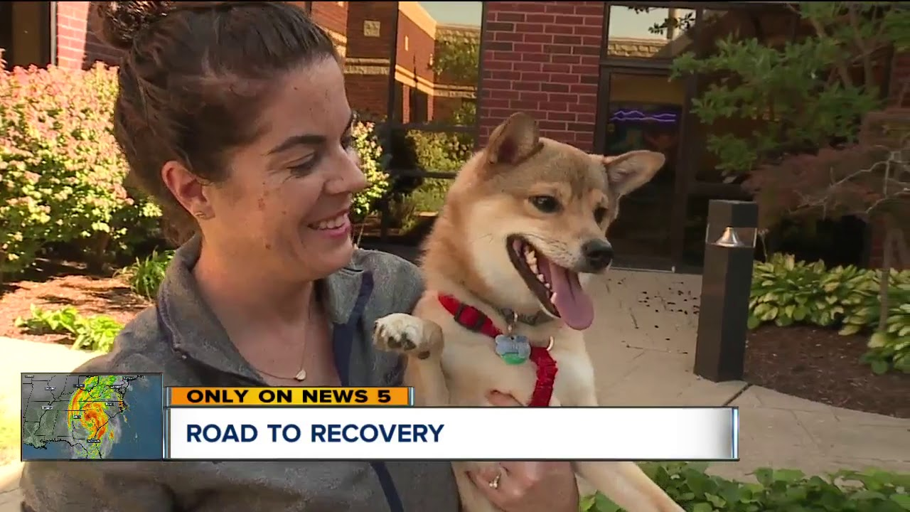 Dog gets a new leg thanks to 3D printing