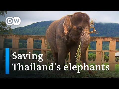 Thailand: The elephant