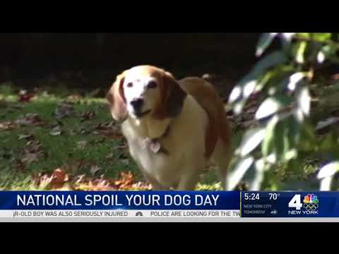 National Spoil Your Dog Day — WNBC 08 10 2017