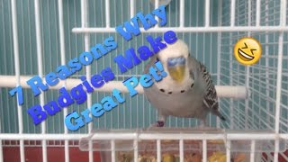 7 Reasons Why Budgies Make Great Pets!