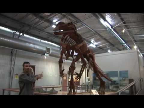 Dinosaur  Muttaburrasaurus