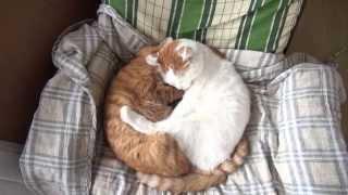 だっこ猫 Huggy cat