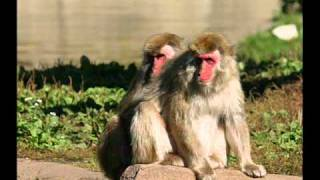 Top 10 Gay (Homosexual) Animals!