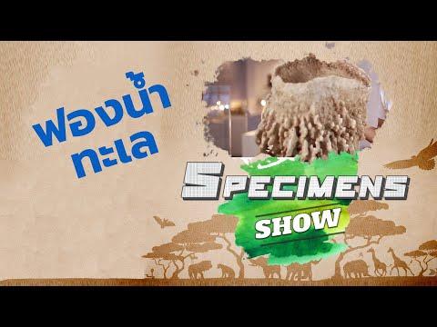 Specimens Show ตอน 17 : ฟองน้ำทะเล
