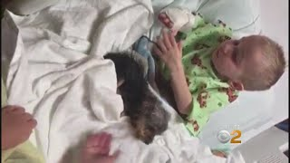 Boy Gets New Dog After Family Was Scammed