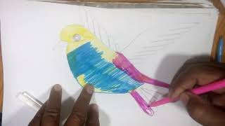 Very Easy Bird Drawing for kids | Coloring bird draw
