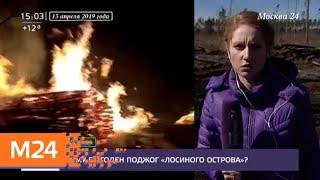 """Смотреть видео Парк """"Лосиный остров"""" могли поджечь намеренно - Москва 24 онлайн"""