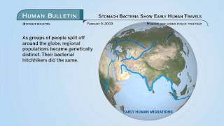Science Bulletins: Stomach Bacteria Show Early Human Travels