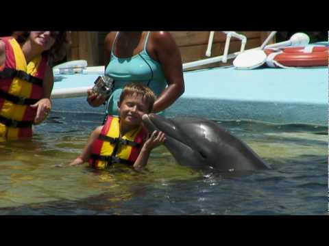 What It Means To Say A Dolphin Committed Suicide