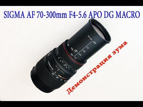 Sigma 70-300mm F4-5.6 APO DG Macro Примеры.