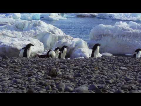 Antarctica, your Paradise Harbor!
