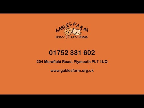 Gables Farm Dogs' and Cat's Home – Animal Care Card Services