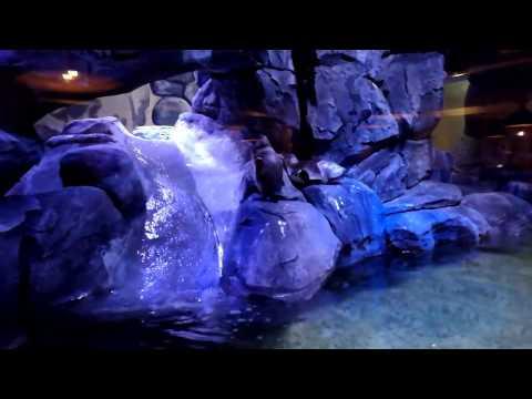 Penguins swimming at Pingoo Restaurant Neo Soho Central Park Jakarta Indonesia