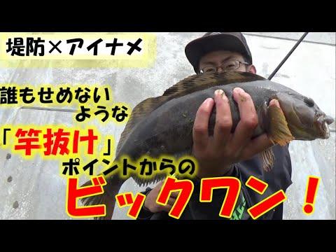 【アイナメ釣り方】堤防の誰も狙わなそうなエリアからビックアイナメを釣る!堤防アイナメの釣り方