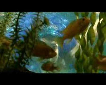Hurjaruuth - Pieni merenneito