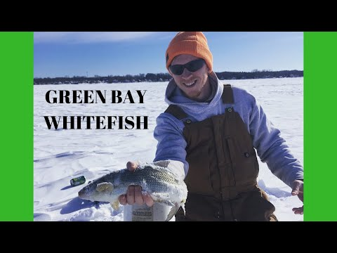 Ice Fishing Green Bay Whitefish Out Of Dykesville WI