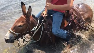 EXTREME MULE RIDING- Rocky Mountain Edition