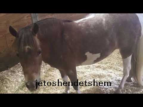 Kali i vogel abuzohet seksualisht, fermeri : E kane demtuar rende