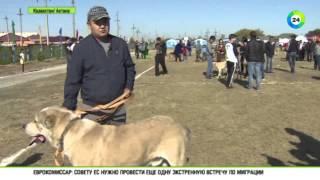 Казахстан возродит национальные породы собак