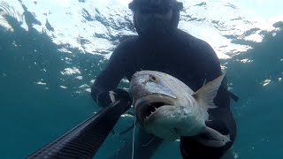 Dentex-Dentice-Diplotus-Sinarit-Karagoz spearfishing from TURKEY-izmir by Cihan Atahan