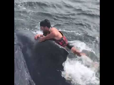 California Fisherman Risks Life To Save Whale