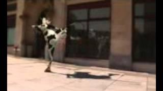 корова прикол ржака