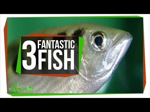 3 Things Fish Shouldn't Be Able to Do