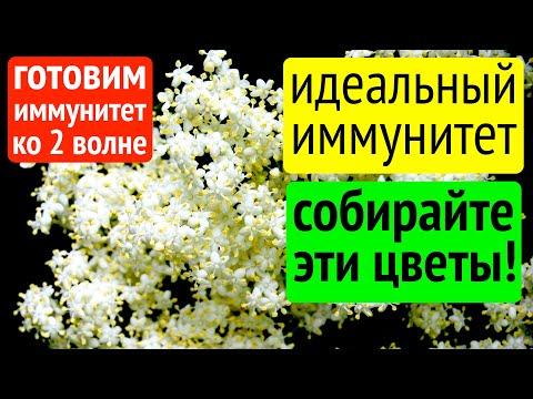 Идеальный иммунитет. Собирайте эти цветы!