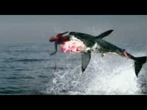 Shark Bites Man in Half - SHOCKING ! ! ! - YouTube