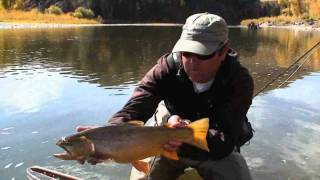 Dry Fly Fishing Colorado Cutthroat, Rainbow and Brown Trout Yampa River October Part 3